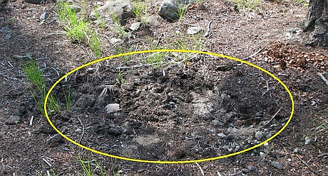 grave site disturbance (2)